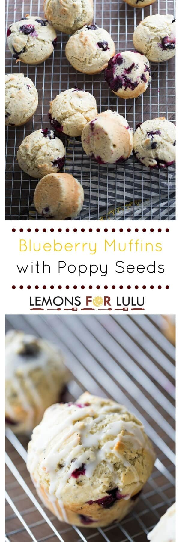 Breakfast will be the stand out meal when these blueberry muffins are served! These soft and tender muffins are speckled with poppy seeds and drizzled with a tangy lemon glaze. The combination of sweet and tart bursts through in each bite!